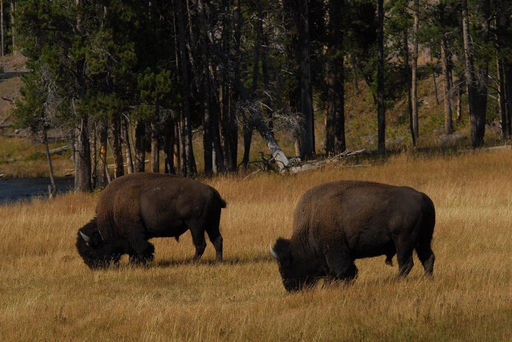 Montana 4 Foto Donnie Sexton